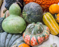 Heirloom squash on display 15 Stock Photo