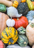 Heirloom squash on display 14 Royalty Free Stock Photography