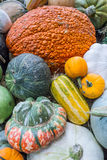 Heirloom squash on display 12 Stock Photo