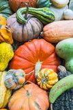 Heirloom squash on display 9 Royalty Free Stock Photography