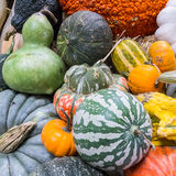 Heirloom squash on display 8 Stock Photo