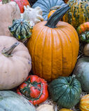 Heirloom squash on display 5 Stock Images