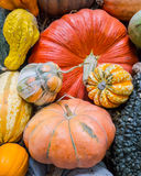 Heirloom squash on display 4 Royalty Free Stock Image