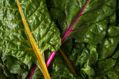 Heirloom Swiss Chard Royalty Free Stock Photos