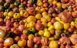 Heirloom Tomato Stock Images
