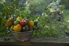 Heirloom Tomato Medley Stock Photo