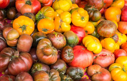 Heirloom tomato's. A large number of red, brown and yellow heirloom tomato's from a farmer's market royalty free stock photo
