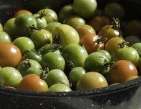 Heirloom Tomatoes Stock Photography