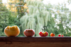 Heirloom Tomatoes. Assorted heirloom tomatoes on a wooden porch railing, with trees in the background Stock Images