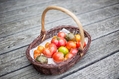 Heirloom tomatoes  in a basket. On wood floor Royalty Free Stock Images