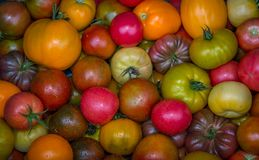 Heirloom tomatoes. Colorful heirloom tomatoes for sale at market Stock Images