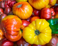 Heirloom tomatoes on display 4 Stock Image
