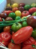 Heirloom Tomatoes. Fresh royalty free stock photography