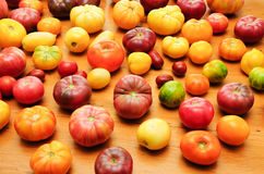 Heirloom tomatoes fresh picked Royalty Free Stock Photos