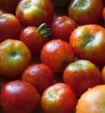 Heirloom Tomatoes Freshly Washed Stock Images