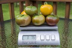 Heirloom Tomatoes On Produce Scale Stock Photography