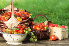 Heirloom variety tomatoes in baskets on rustic table. Colorful tomato - red,yellow , orange. Harvest vegetable cooking Stock Photos