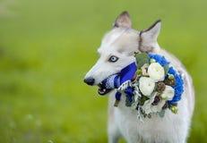 Heiserer Hund, der Hochzeitsblumenstrauß hält Lizenzfreie Stockfotos