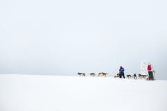 Heiserer Hund, der in Lappland Finnland rodelt Stockfotos