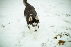 Heiseres Hündchen auf Schnee Stockfotografie
