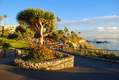 Heisler Park's landscaped walkways above Divers Cove Beach area, Laguna Beach, California. This image was taken during the winter months along Heisler Park's royalty free stock images