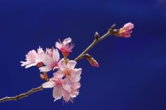 Heitre Blüte stockfotografie