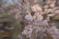 Heitre Blüte mit Zoomtechnik Stockfotografie