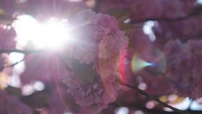 Heitre Blüten im Frühjahr mit Blendenfleck stock footage