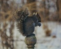 Heitres kleines Eichhörnchen Lizenzfreies Stockbild
