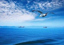 Hekelende zeemeeuw royalty-vrije stock fotografie