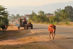 Hel familj med hundkapplöpning och apan på en traktor Royaltyfri Foto