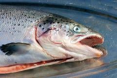 hel fiskuppläggningsfatsilver royaltyfria bilder