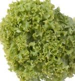 hel grönsallat royaltyfri bild