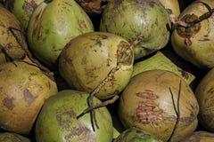 Hel grupp av kokosnöten Arkivfoton