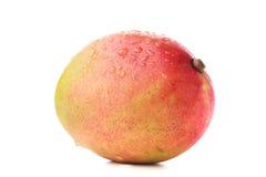 Hel röd och gul mango Royaltyfri Bild