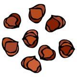 Hela hasselnötkärnor sunt mellanmål Ny lantgårdskördprodukt Vegetarisk mat Realistisk hand dragen illustration Savoyar Doo Fotografering för Bildbyråer