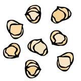 Hela hasselnötkärnor sunt mellanmål Ny lantgårdskördprodukt Vegetarisk mat Realistisk hand dragen illustration Savoyar Doo Royaltyfri Bild