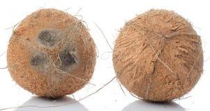 hela kokosnötter Arkivbilder