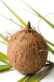 Hela kokosnötter och sidor på vit Royaltyfri Foto