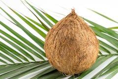 Hela kokosnötter med sidor på vit Royaltyfria Bilder