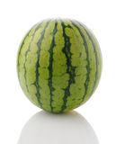 Hela Mini Seedless Watermelon Vertical Arkivbild