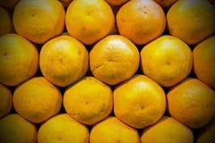 Hela mogna apelsiner Arkivfoton