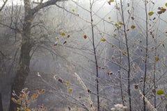 helada Foto de archivo libre de regalías