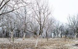 Helada blanca en árboles imagen de archivo