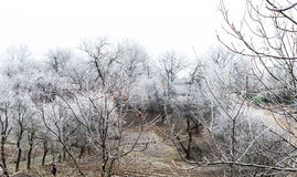Helada blanca en árboles en el jardín fotos de archivo libres de regalías