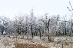 Helada blanca en árboles en el jardín imagen de archivo libre de regalías