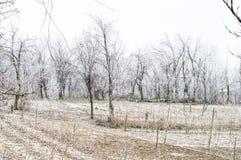 Helada blanca en árboles en el jardín imagen de archivo