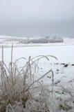 Helada de la hierba y del paisaje Imagen de archivo libre de regalías
