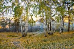 Helada de la mañana del otoño en bosque del bearch Fotografía de archivo libre de regalías