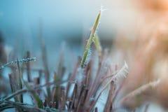 Helada de la mañana en las plantas con el fondo borroso Imagen de archivo libre de regalías